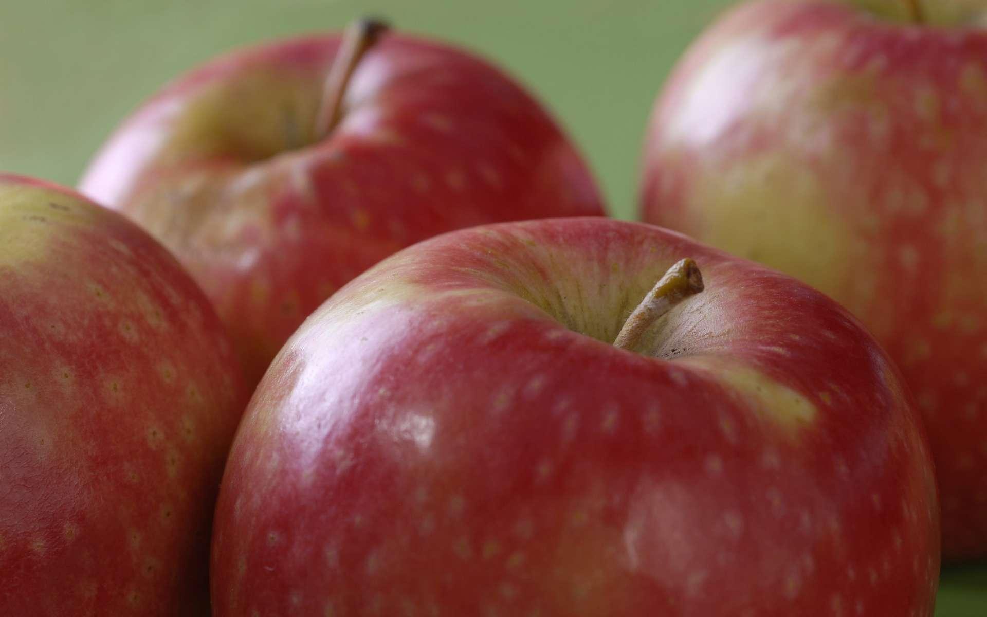 Une pomme contient des millions de bactéries, mais c'est pour notre bien ! © APAL, Flickr