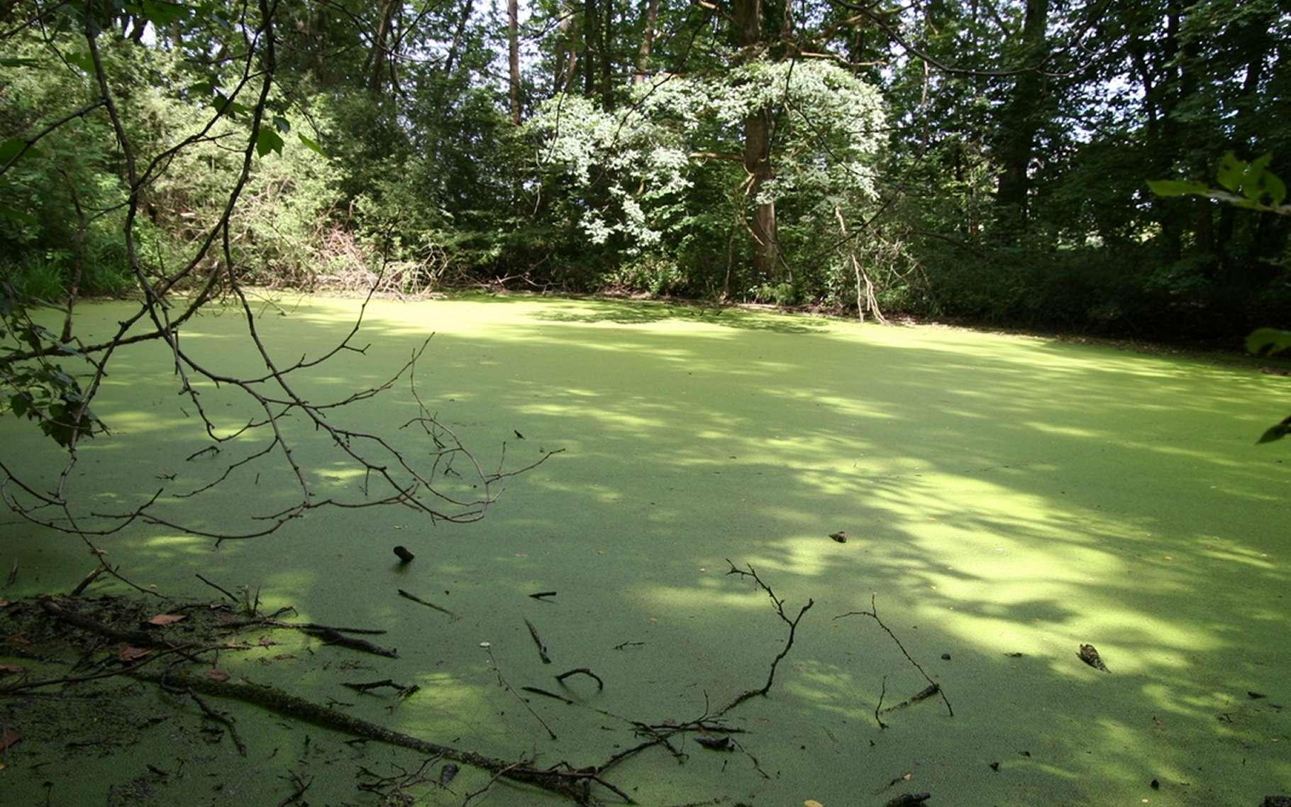 La Petite Camargue alsacienne est une réserve naturelle très ancienne, remontant au XIXe siècle. Elle abrite des zones humides qui étaient de larges marais alimentés par des bras du Rhin avant sa canalisation. Ici un marais proche de Saint-Louis, dans le Haut-Rhin. © Lionel Rich, cc-by-sa-2.5