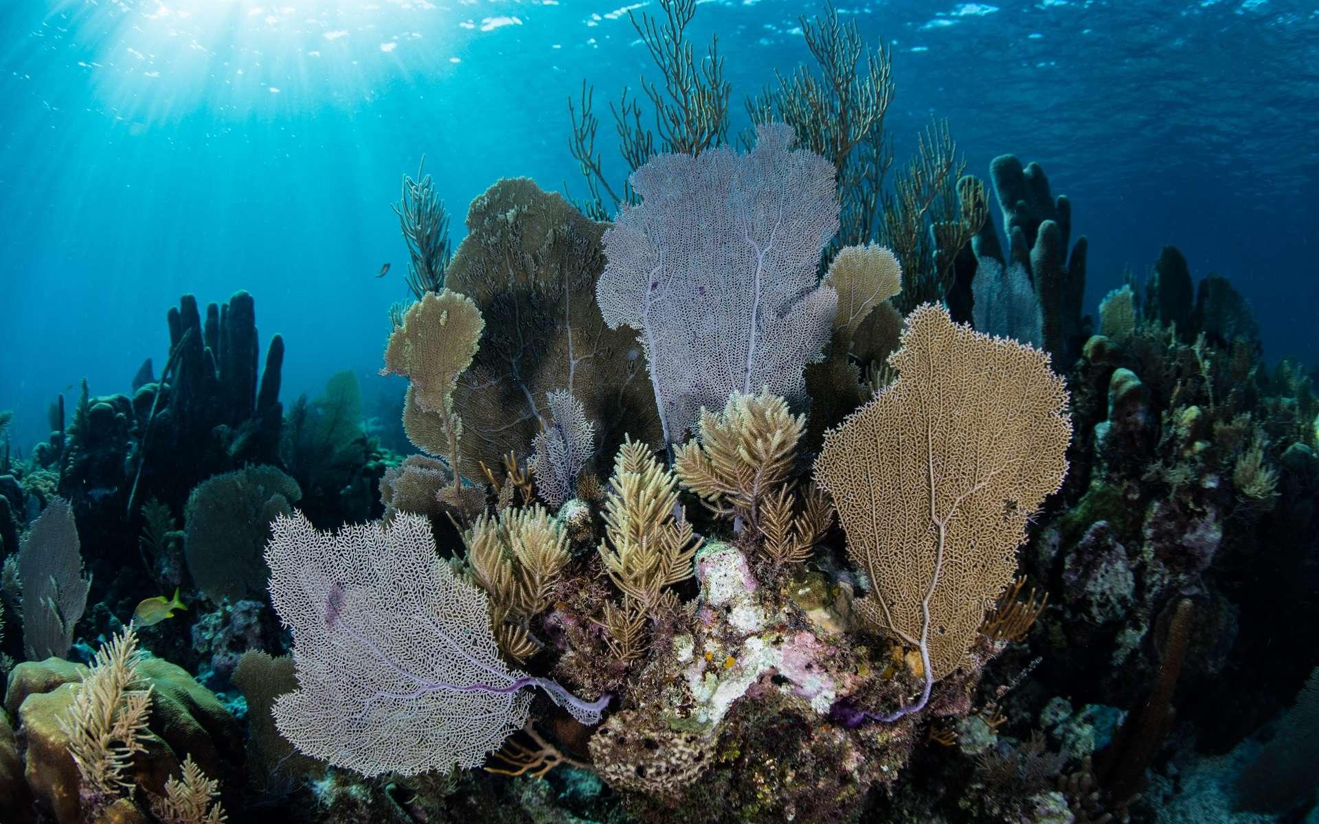 Les récifs coralliens sont le site d'une grande biodiversité parfois menacée. © Ethan Daniels, Shutterstock