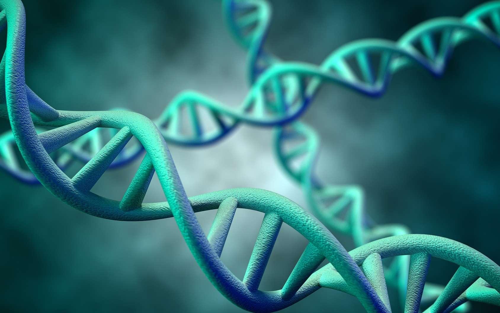 Lors de la réplication d'ADN, la séquence doit être conservée pour obtenir deux molécules filles identiques. © supparsorn, Fotolia