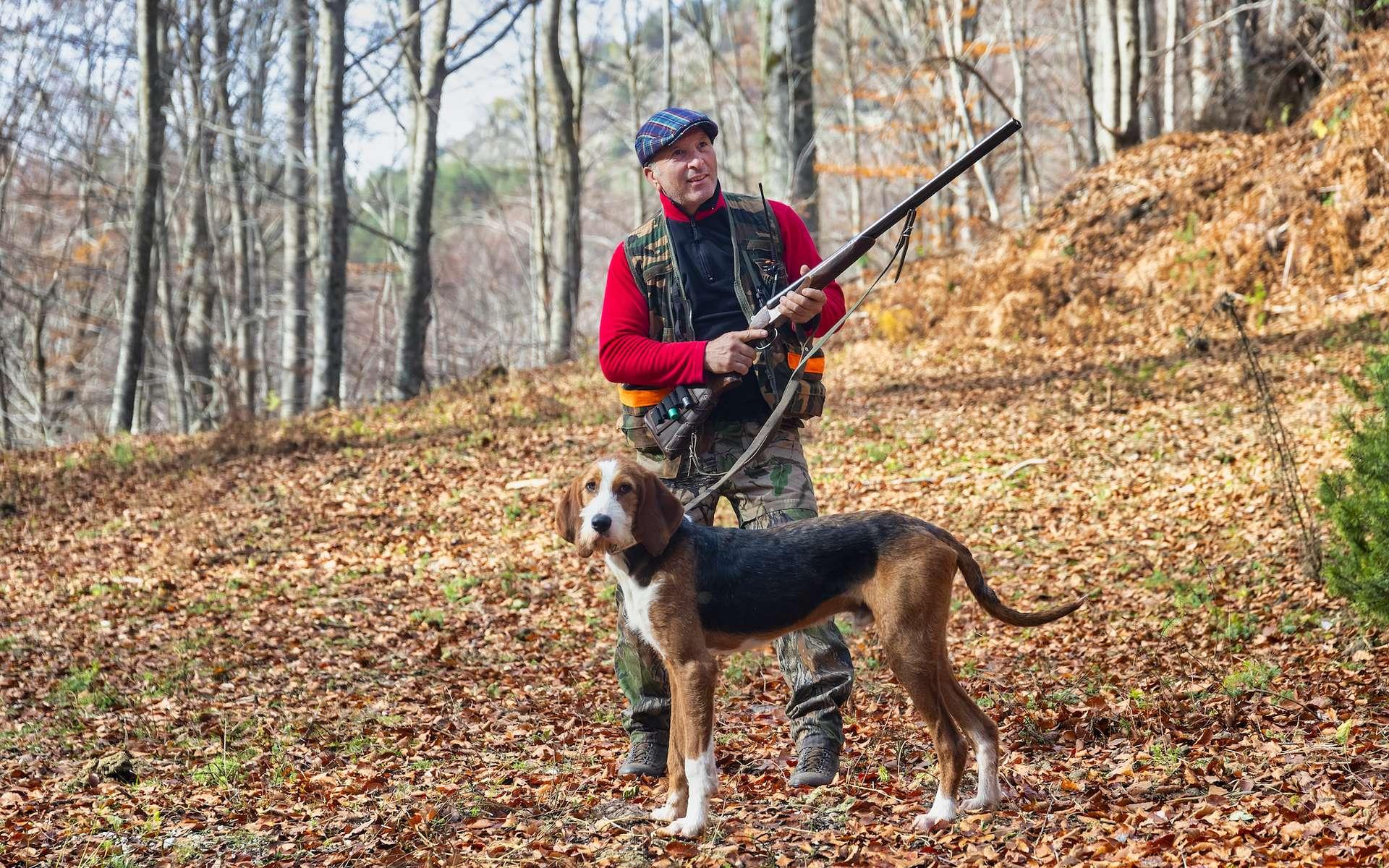 Quelles sont les meilleures races de chien de chasse ? © verve, Adobe Stock