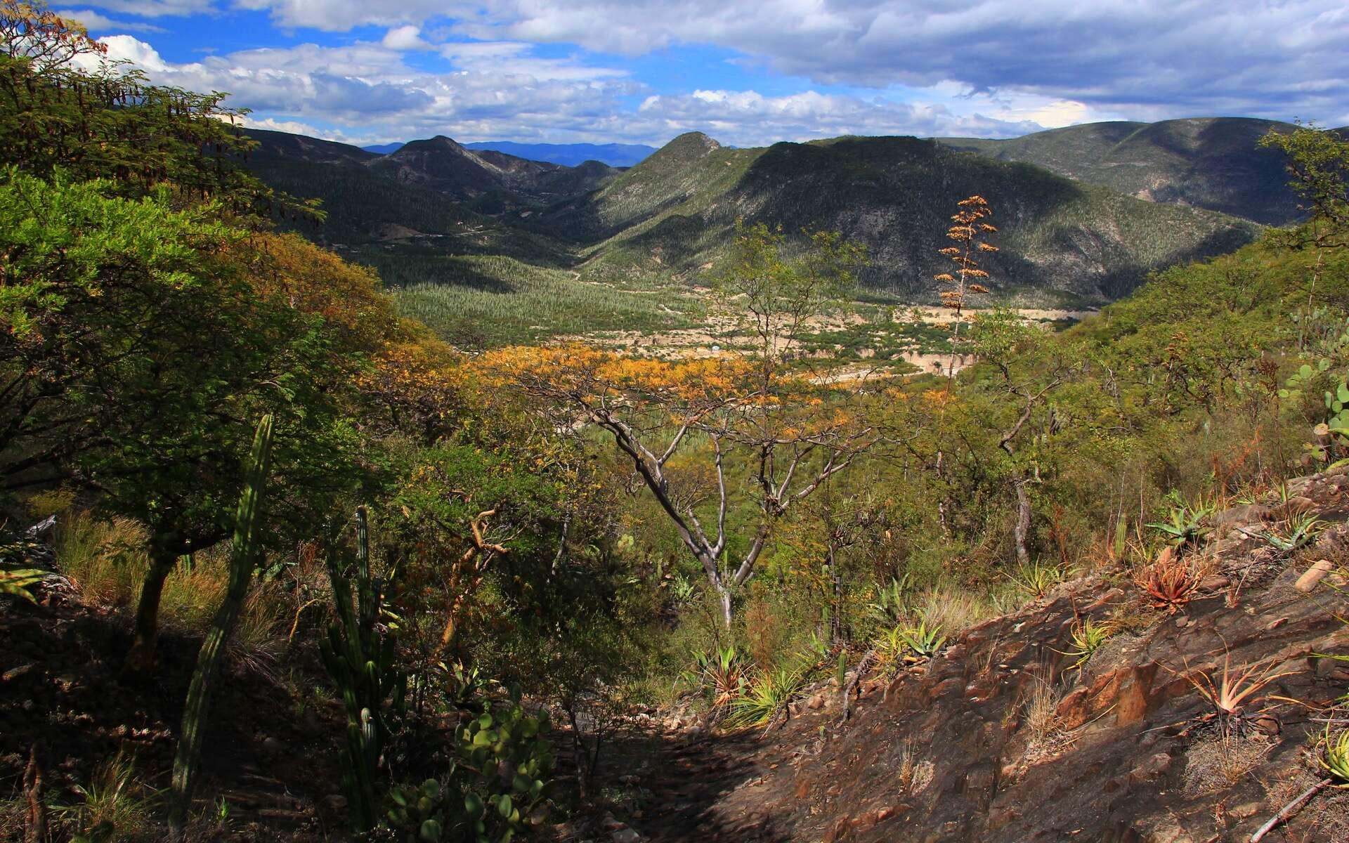 Paysage de la réserve de Tehuacan-Cuicatlan dans l'État de Puebla, au Mexique, non loin de la découverte de l'endroit où des outils retrouvés attestent d'une présence humaine remontant jusqu'à 33.000 ans. © Anton, Adobe Stock