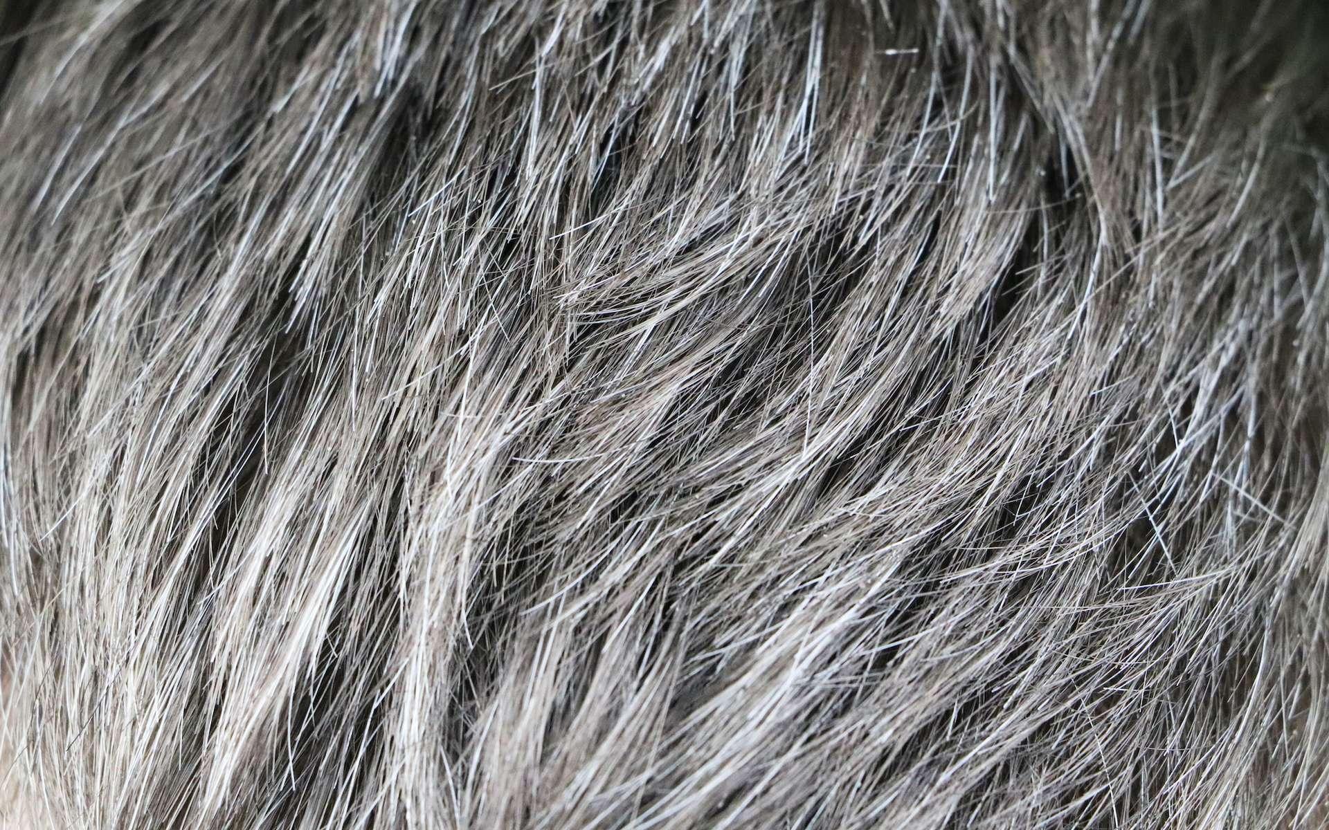 Oui, le stress favorise l'apparition des cheveux gris