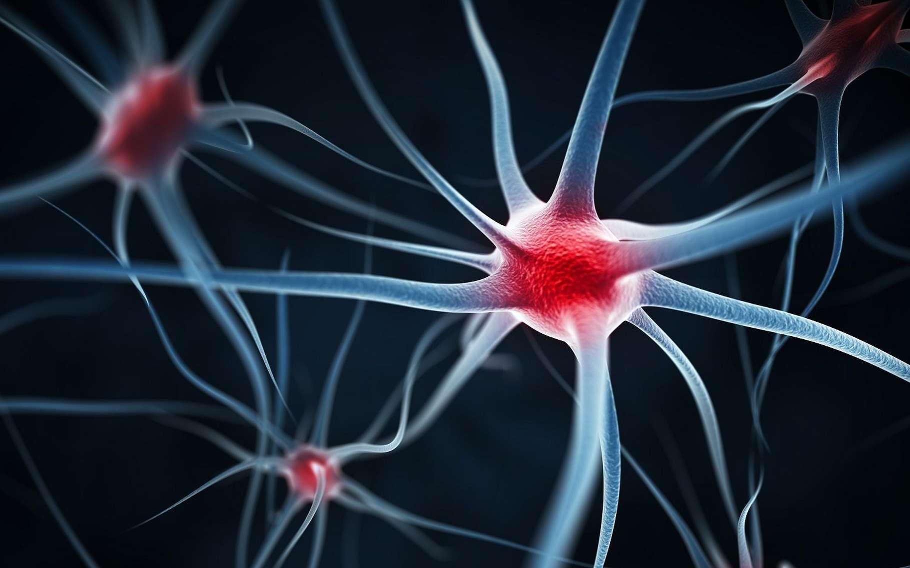 Chez les vertébrés, les prolongements des neurones par lesquels part l'influx nerveux (les axones) sont protégés par une gaine de myéline, une substance composée de protéines et de lipides qui est secrétée par des cellules entourant la fibre. La myéline facilite le passage de l'influx nerveux et en augmente la vitesse de propagation. Des maladies peuvent l'altérer. C'est le cas de la sclérose en plaques qui touche les fibres du système nerveux central (cerveau et moelle épinière). © Leigh Prather, Shutterstock