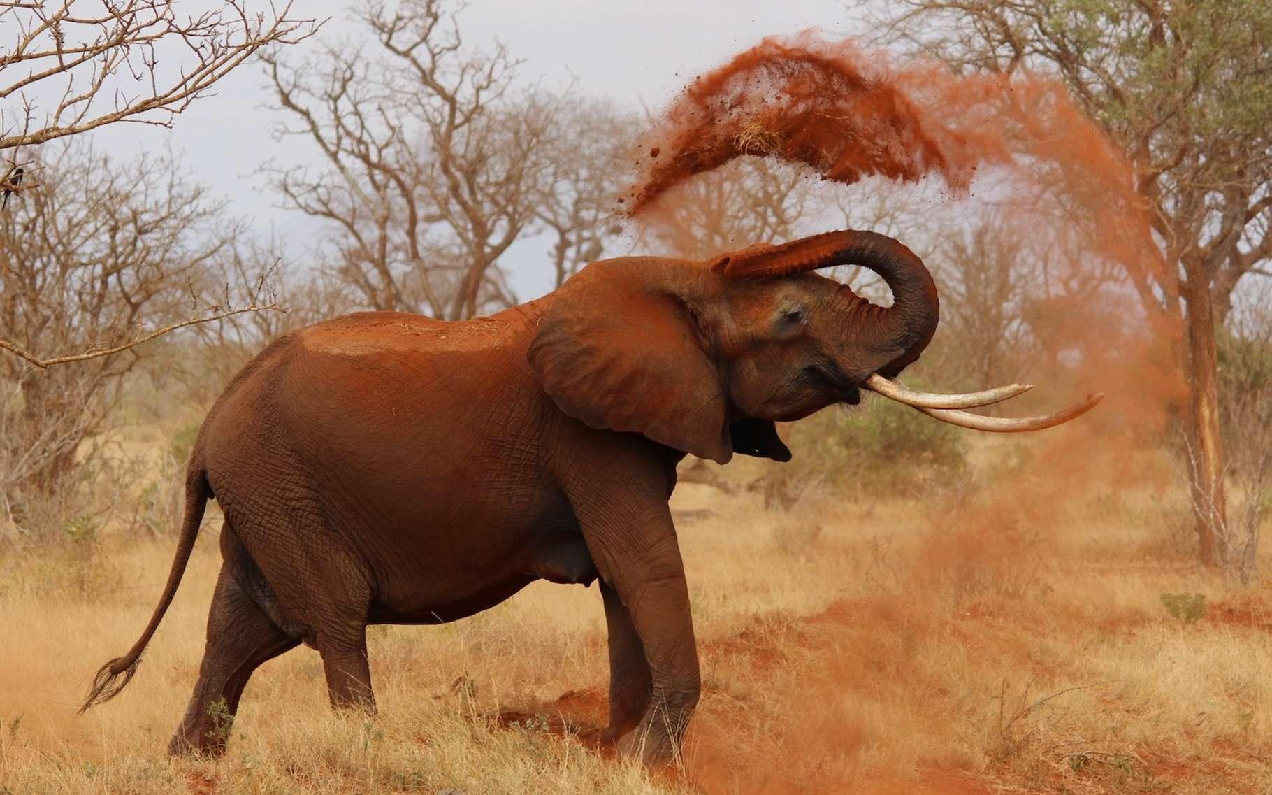 L'expérience du dentifrice de l'éléphant repose sur une ensemble de réactions chimiques qui produisent une sorte de mousse de volcan qui, en s'échappant d'une fiole, fait penser à un dentifrice qui sortirait d'un tube géant. © kijatani, Pixabay License