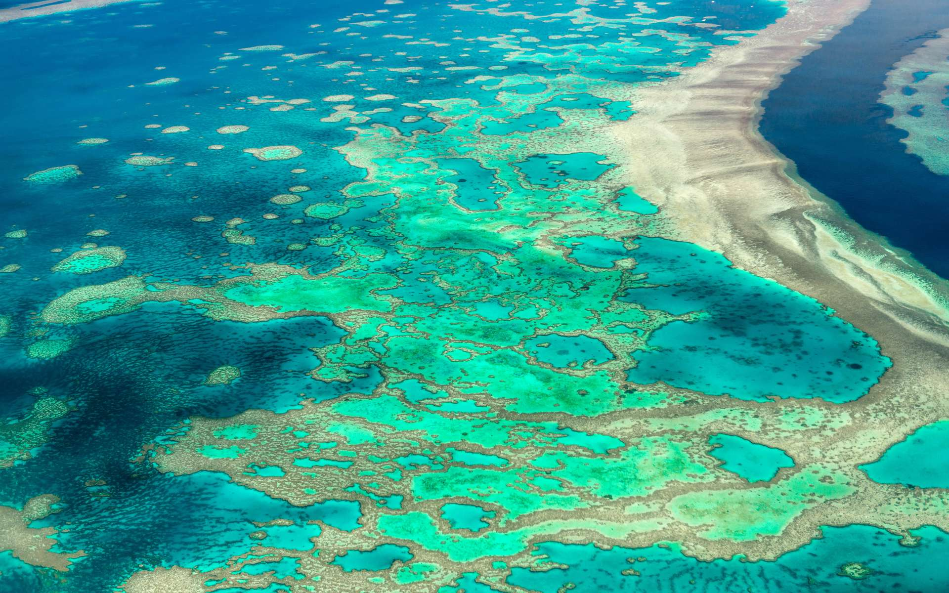 La Grande Barrière de Corail est le plus grand écosystème corallien du monde. © Superjoseph, Adobe Stock