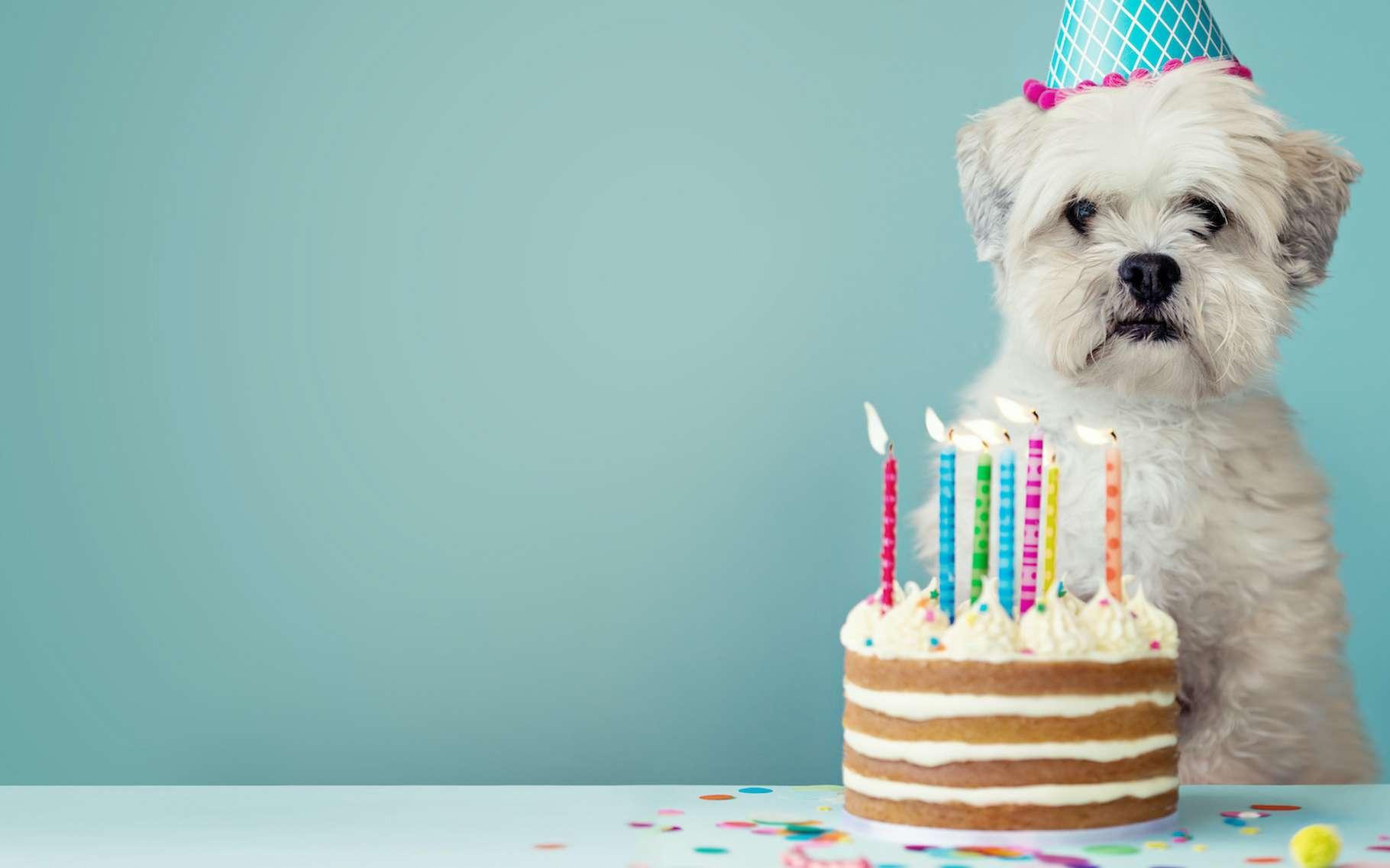 Quel est vraiment l'âge de votre chien ?