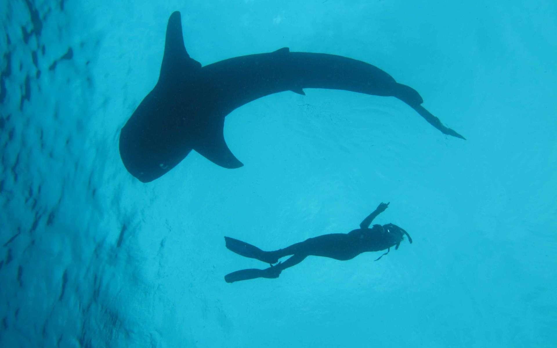 Certains pays émergents ont affiché des indices de santé des océans n'ayant rien à envier aux pays développés, à l'image du Suriname (69) ou des Seychelles (73). © Conservation International/Mark Erdmann