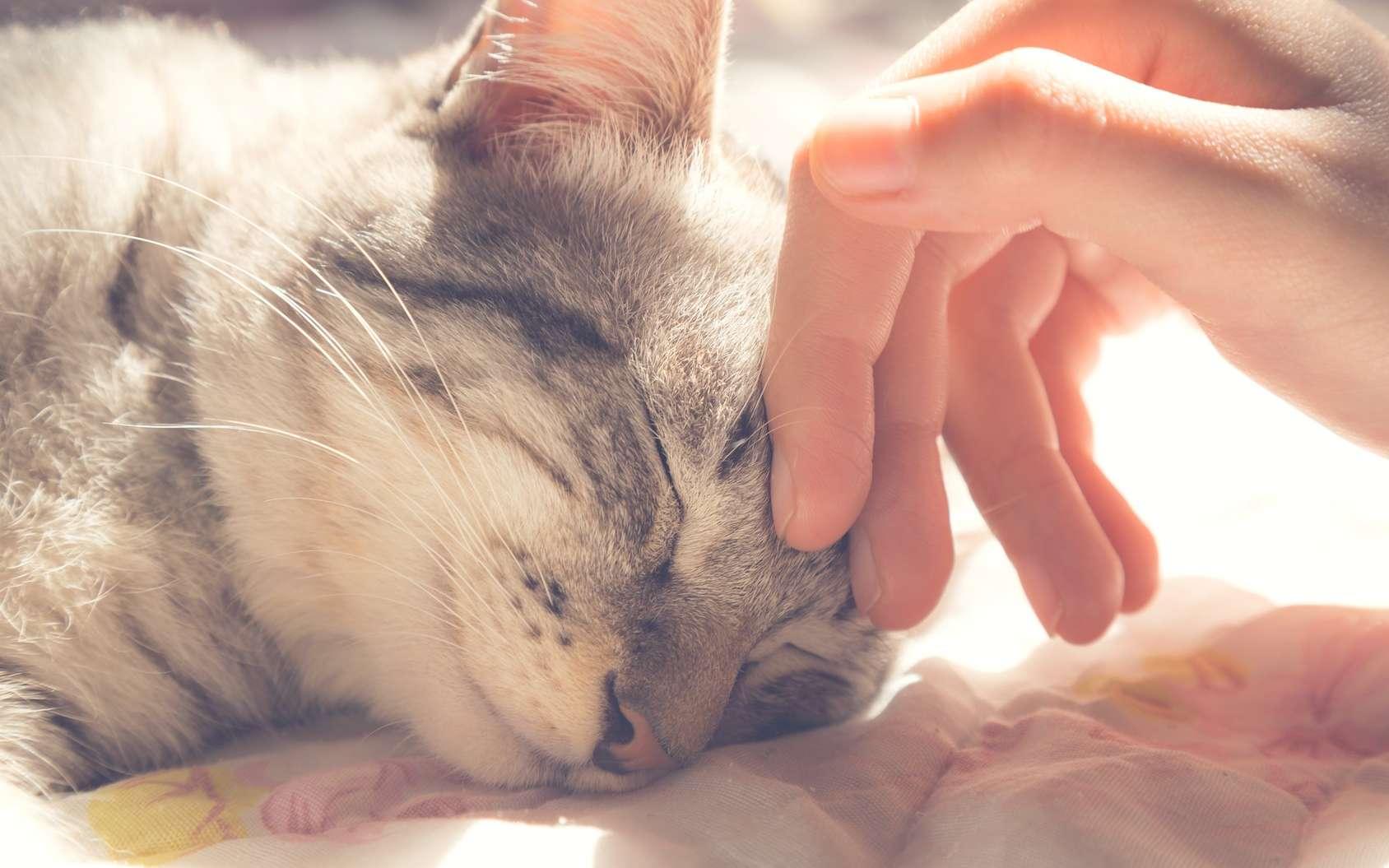 Asocial le chat ? © gumpapa, Fotolia