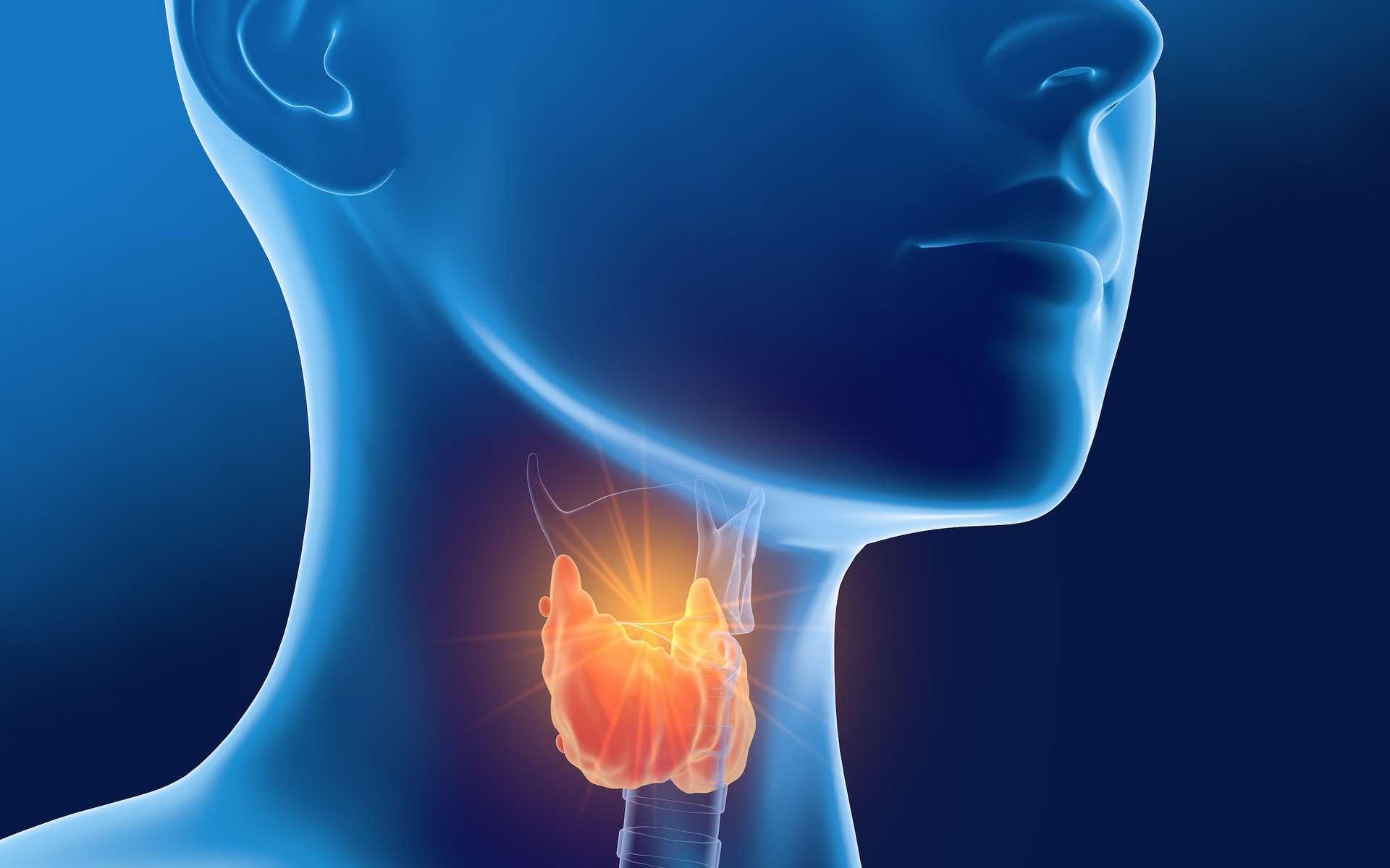 La maladie de Basedow est la première cause d'hyperthyroïdie chez les femmes. © Axel Kock, Adobe Stock