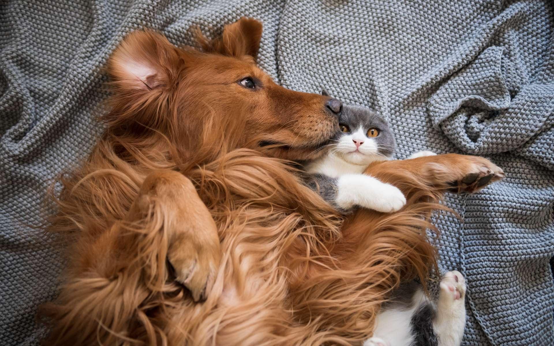 D'après une enquête transversale menée auprès de résidents britanniques entre avril et juin 2020, nos animaux de compagnie ont pris soin de notre santé mentale pendant le confinement. © chendongshan, Adobe Stock