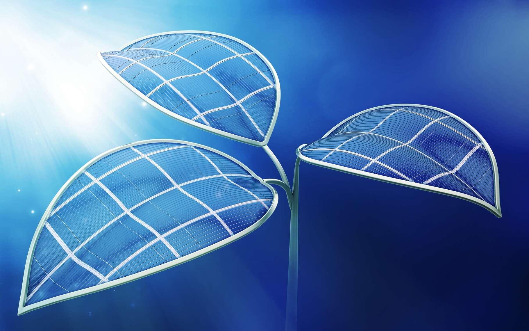 La feuille bionique 2.0 de l'université d'Harvard peut transformer le soleil et l'eau en électricité ou en combustibles liquides. © Mopicn, Shutterstock