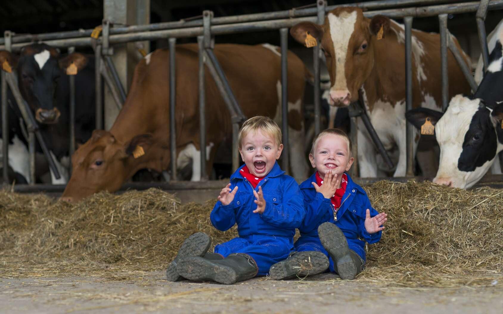 Au contact de certains animaux, comme les vaches et les chats, les humains produiraient des anticorps, améliorant l'efficacité du système immunitaire. © sges, Fotolia