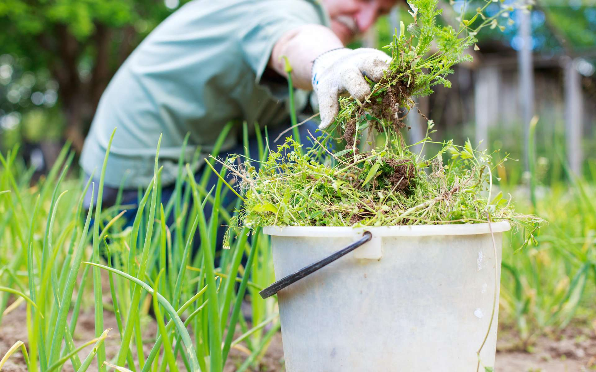 Les moyens écologiques pour se débarrasser des mauvaises herbes. © stopabox, Adobe Stock