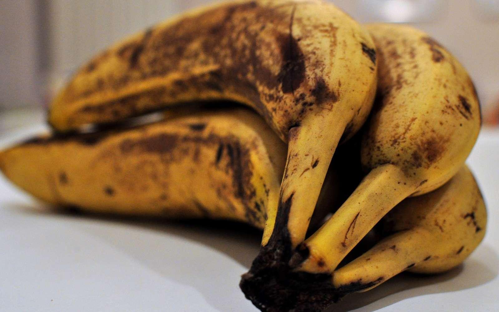 Les fruits mûrs contiennent des esters qui peuvent être produits, dans l'industrie, par une réaction d'estérification. © Frédérique Voisin-Demery, Flickr, CC by 2.0