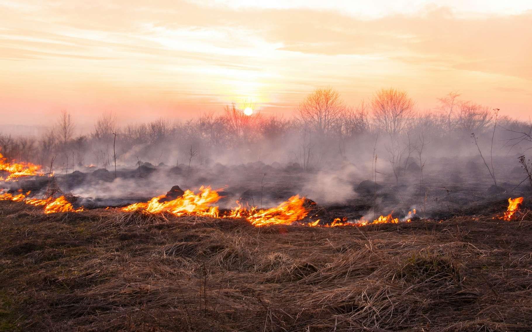 Pour s'installer en Nouvelle-Zélande, les Maoris ont brûlé des zones boisées. Des chercheurs en ont retrouvé des traces jusqu'en Antarctique. © Viktoria, Adobe Stock