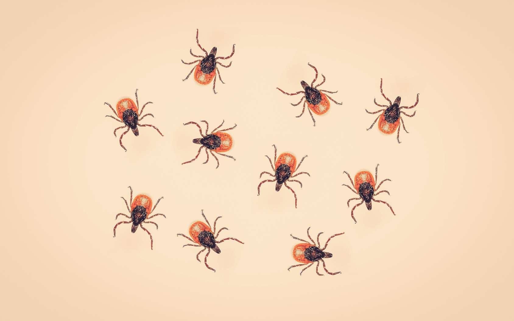 L'épidémie de Lyme est-elle due à une expérimentation d'arme biologique aux États-unis ? © Polarpx, Fotolia