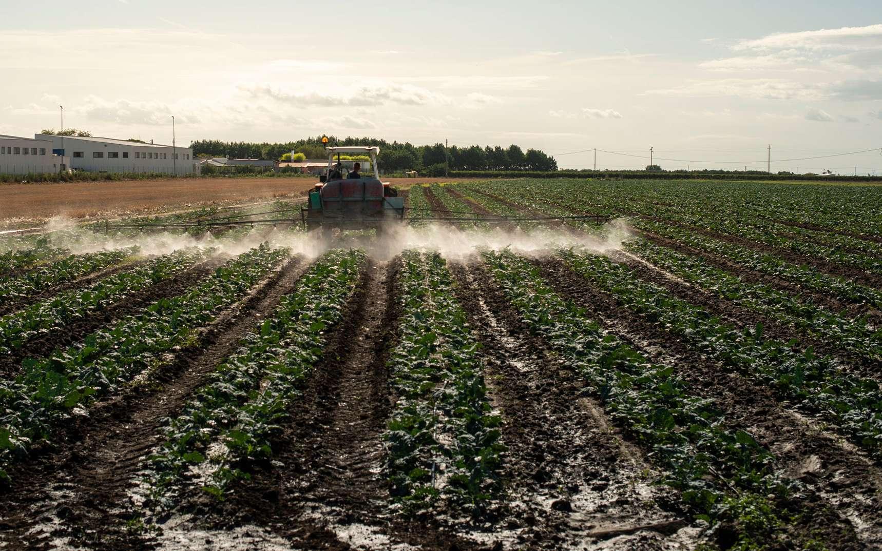 Un tracteur pulvérise des pesticides sur un champ ©deyangeorgiev, Envato elements