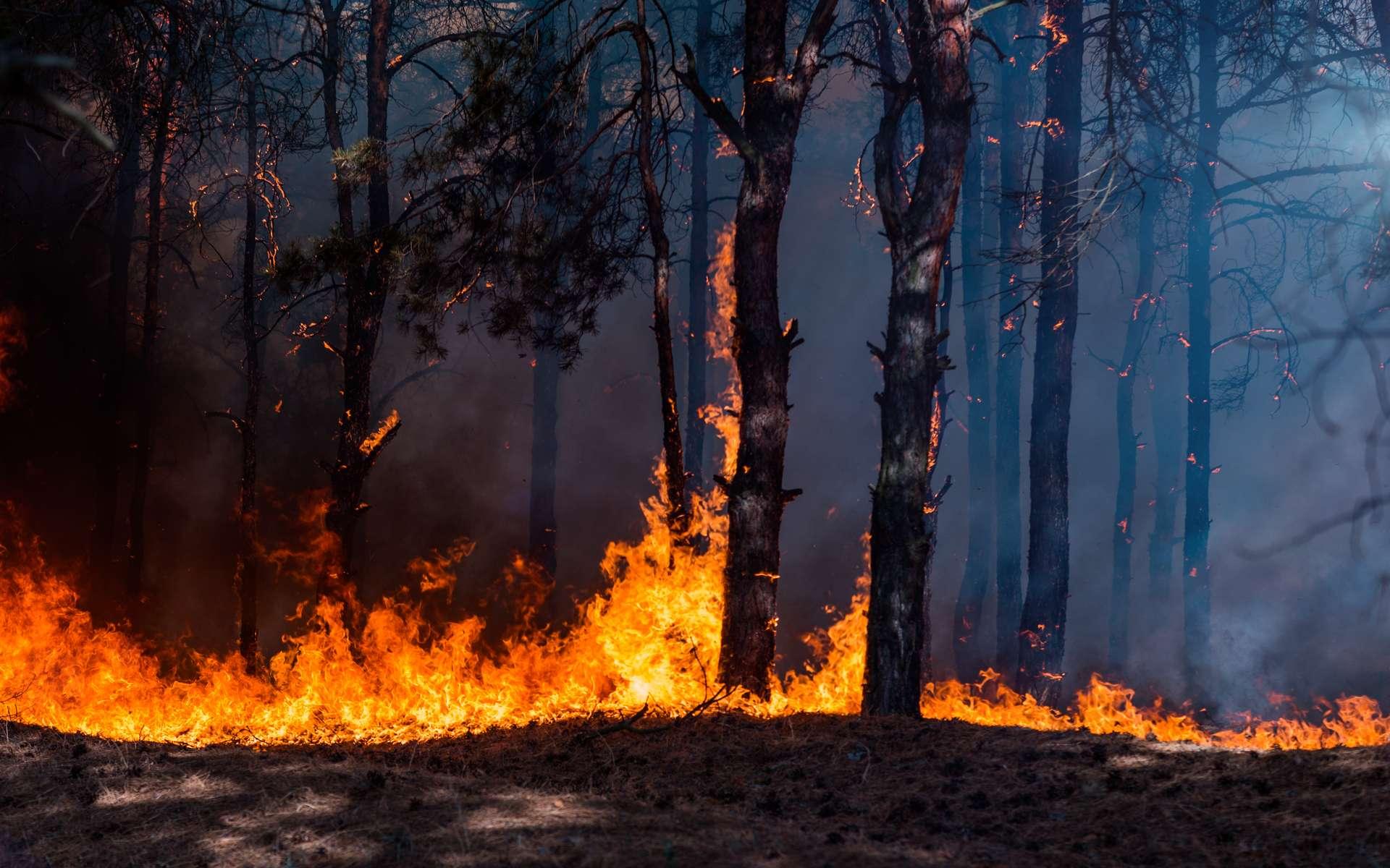 Climat : un abribus s'enflamme spontanément en Angleterre