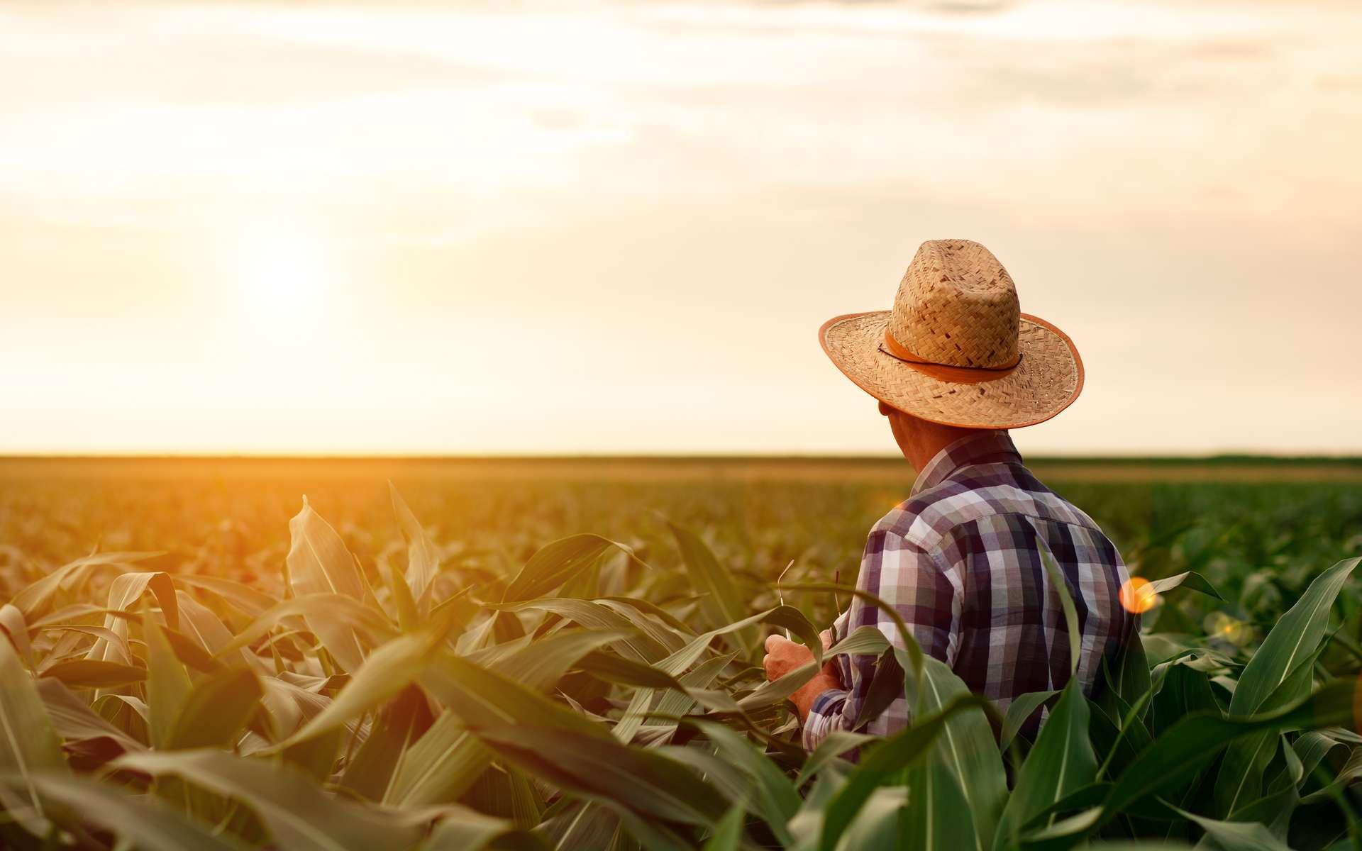 L'agriculture regorge de métiers peu connus à l'utilité indiscutable. © PointImages, Adobe Stock