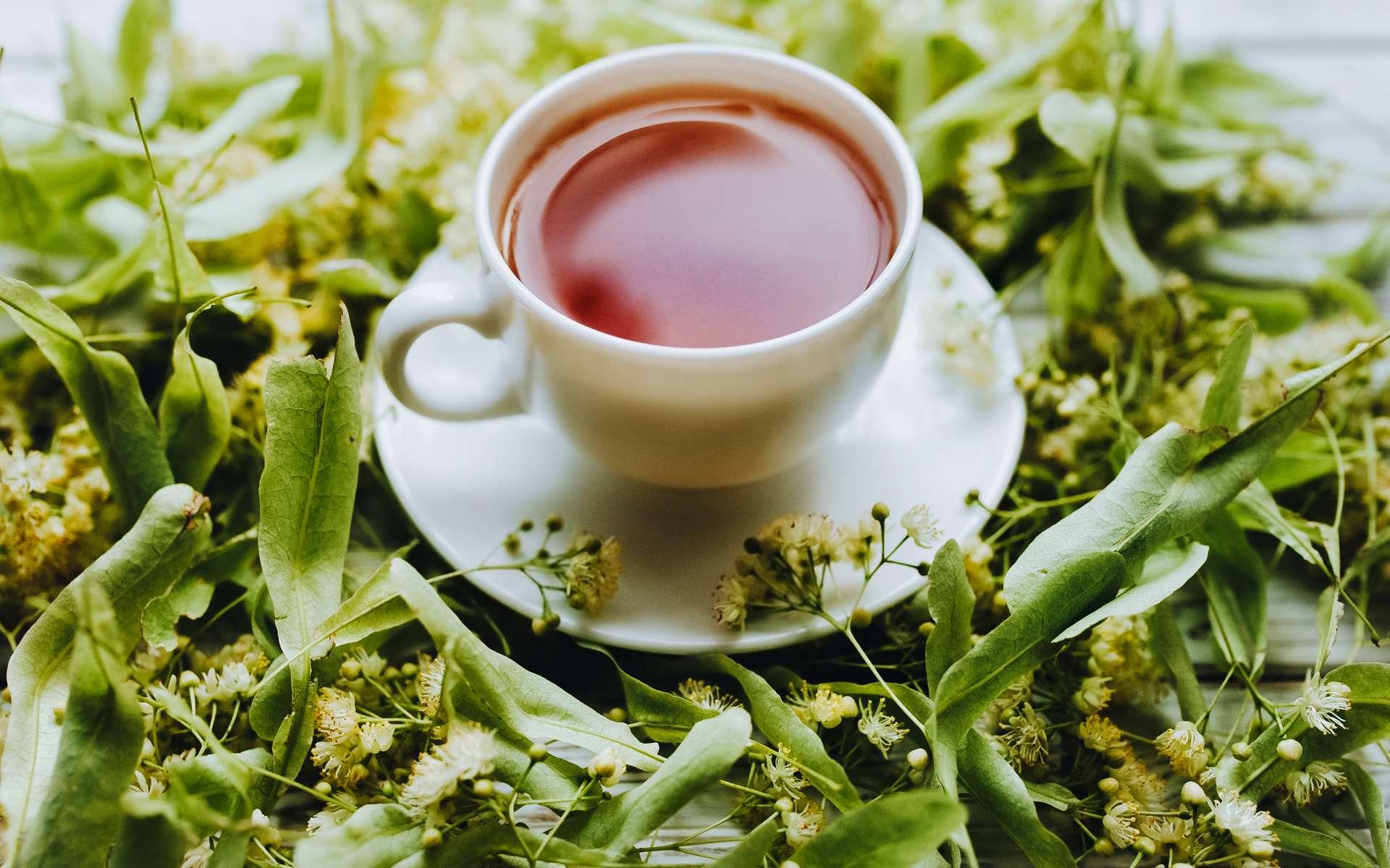 L'acide protocatéchique, un métabolite présent dans le thé vert. © shchus, Adobe Stock