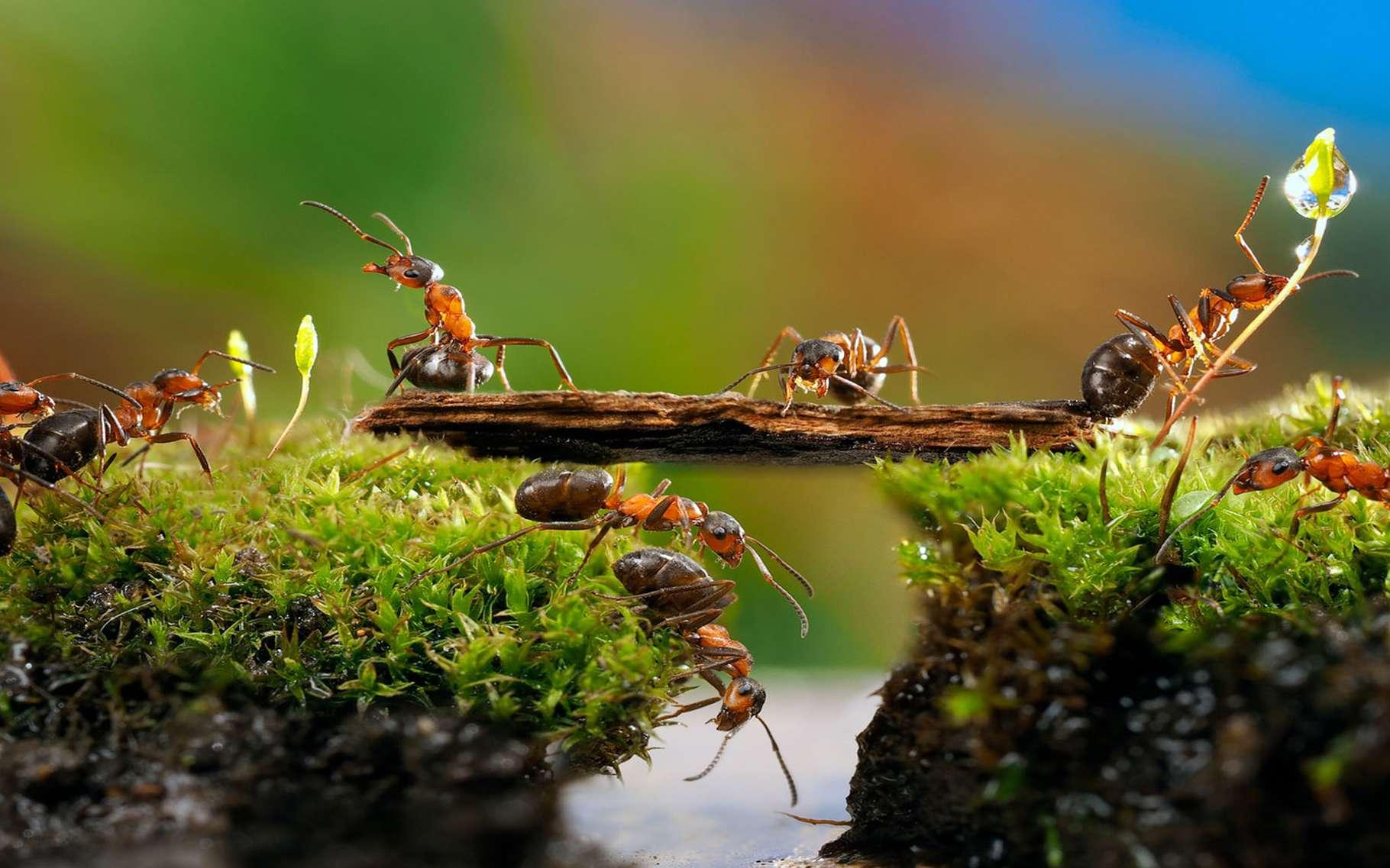 Faire Fuir Les Fourmis les fourmis prédatrices : stratégies de chasse | dossier