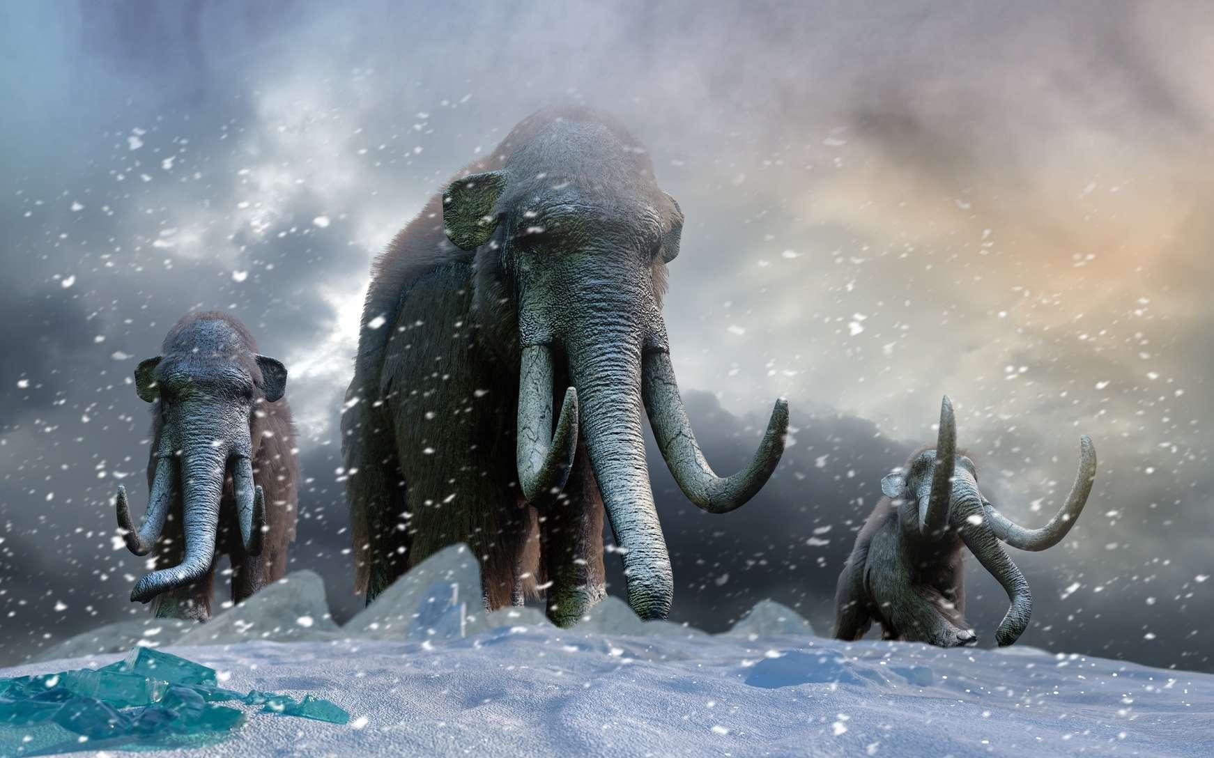 Le mammouth est un éléphantidé fossile. © denissimonov, Fotolia