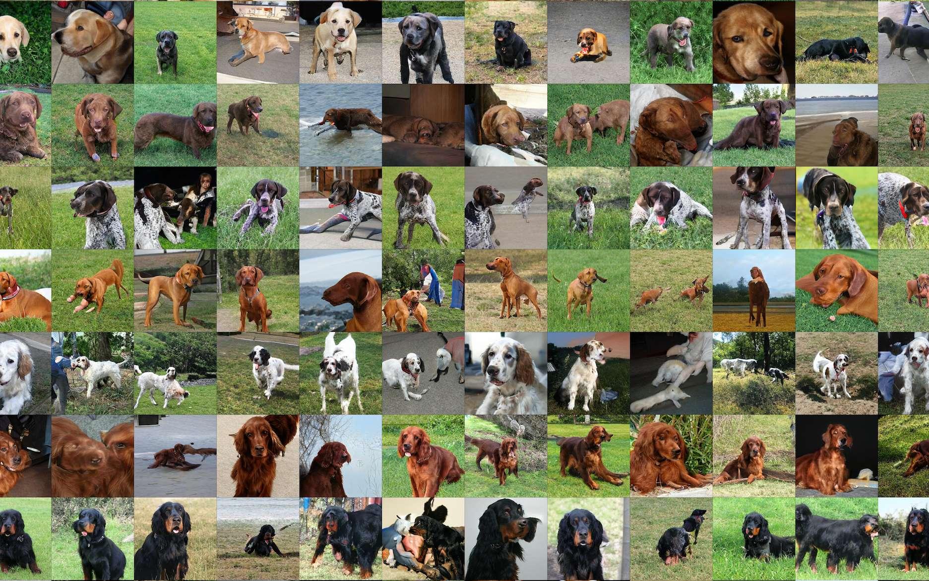 Ces chiens n'existent pas : ils ont été créés par l'IA de Google. © Oriol Vinyals