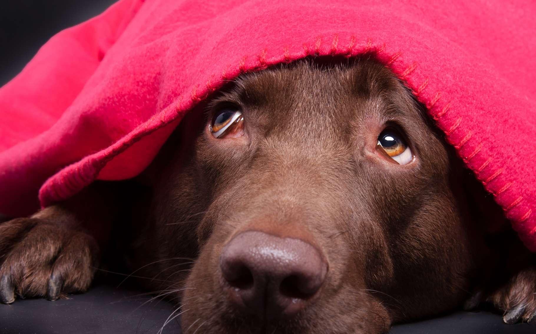 Certains chiens ont très peur des feux d'artifice. Il faut savoir prendre cette peur en compte pour parvenir à les apaiser. © Magnus Pomm, Fotolia