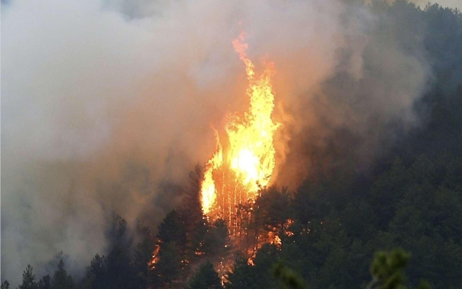 Incendie de forêt en Corse, en 2017. © Pascal Pochard-Casabianca, AFP Archives