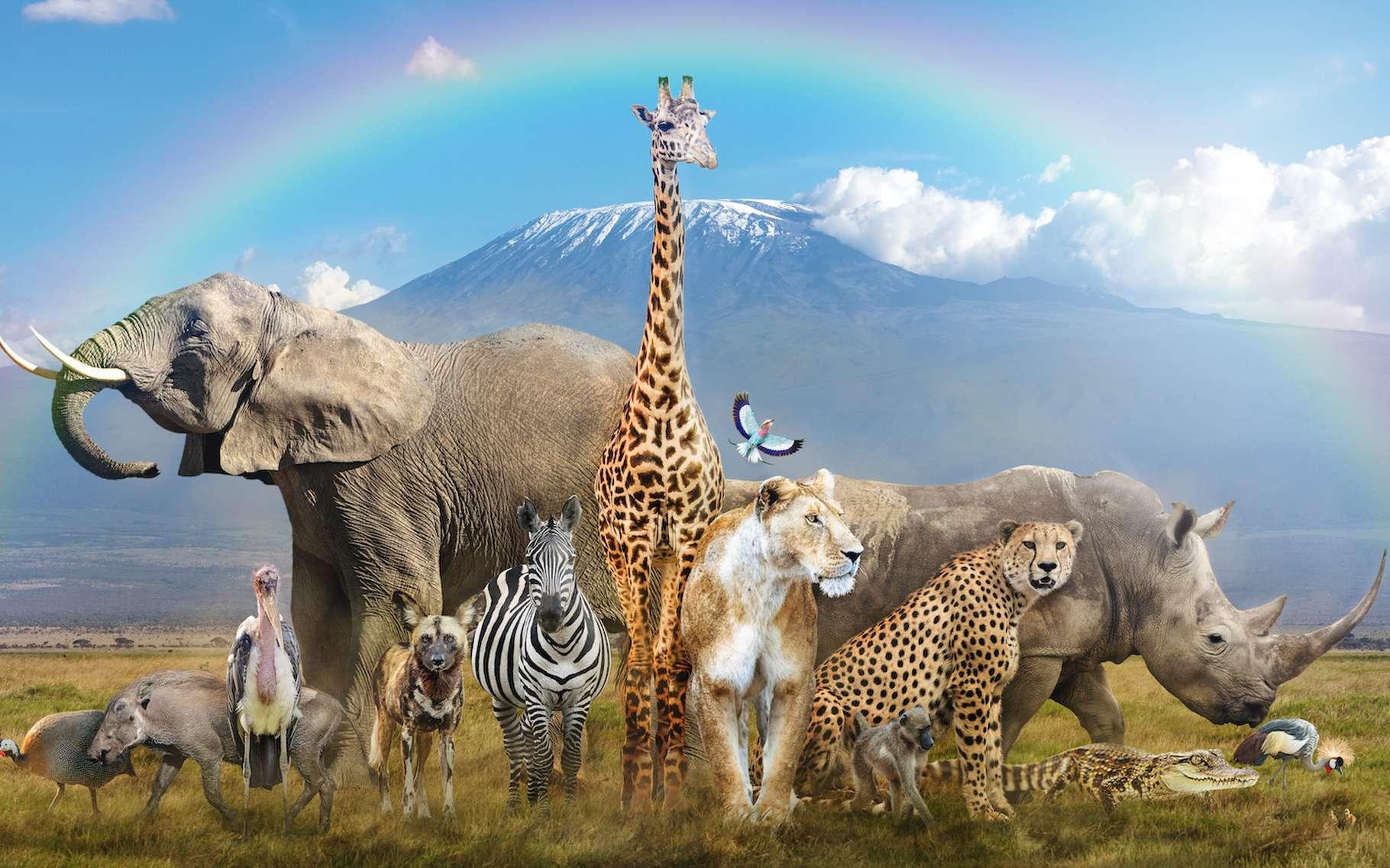 En rachetant le zoo de Pont-Scorff (Bretagne), Rewild, une coalition de sept associations, espère monter un centre de réhabilitation de la faune sauvage pour soutenir la lutte contre le trafic des animaux. © adogslifephoto, Adobe Stock