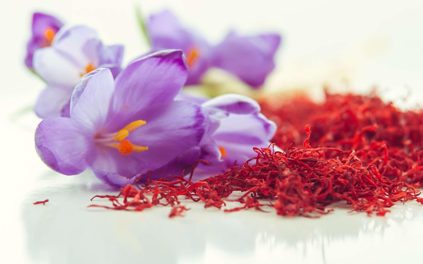 Définition | Crocus à safran - Crocus sativus | Futura Planète