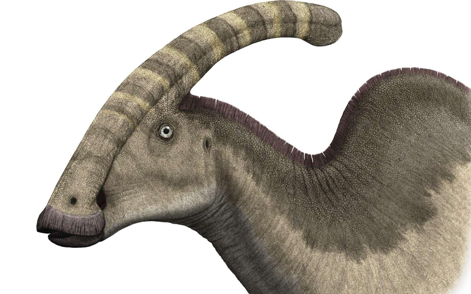 Une représentation d'artiste d'hadrosaure à bec de canard (Parasaurolophus walkeri), un dinosaure bien connu qui vivait sur l'île continent de Laramidia. © Steveoc 86, Wikipédia, CC by-sa 2.5