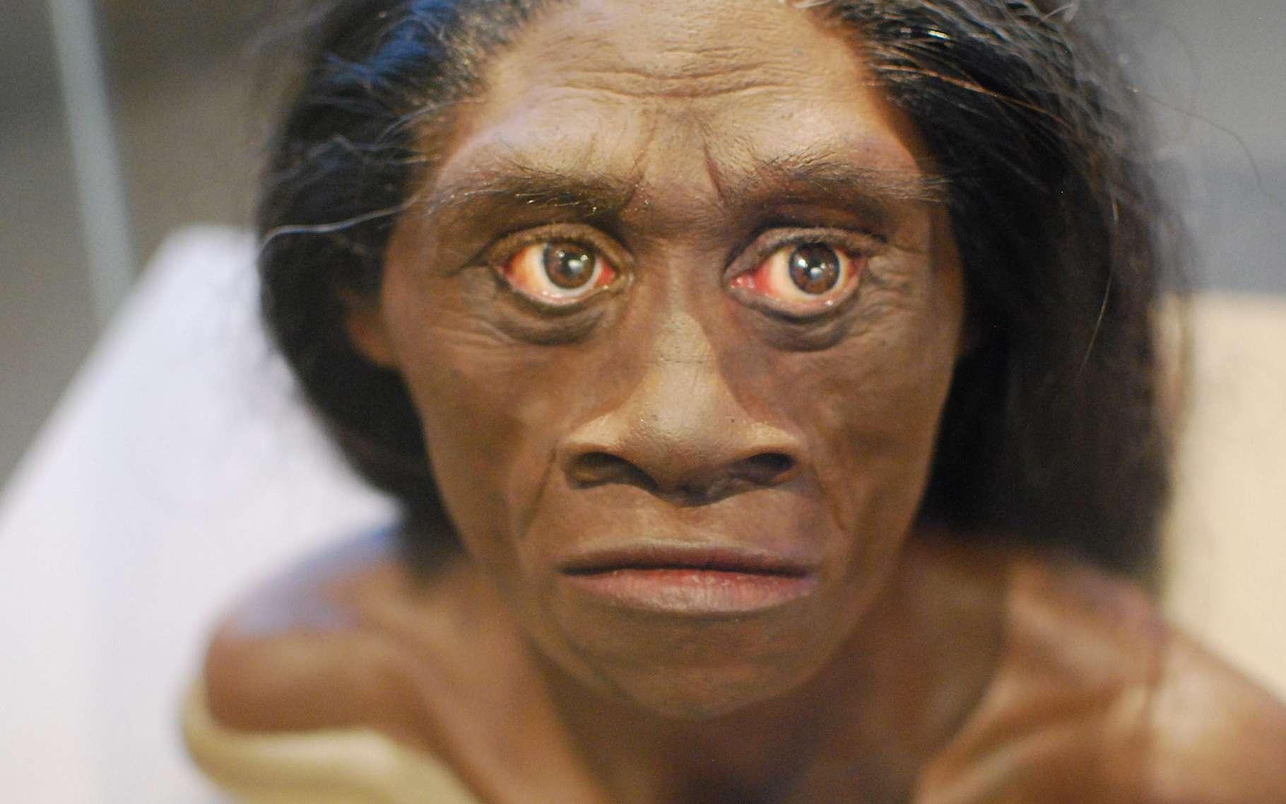 L'Homme de Florès – dont on découvre ici une reconstitution – n'aurait pas de lien avec les pygmées qui vivent actuellement sur l'île indonésienne. Une preuve, selon les chercheurs, que la vie insulaire favorise l'émergence d'hommes de taille modeste. © Karen Neoh, Flickr, CC by 2.0