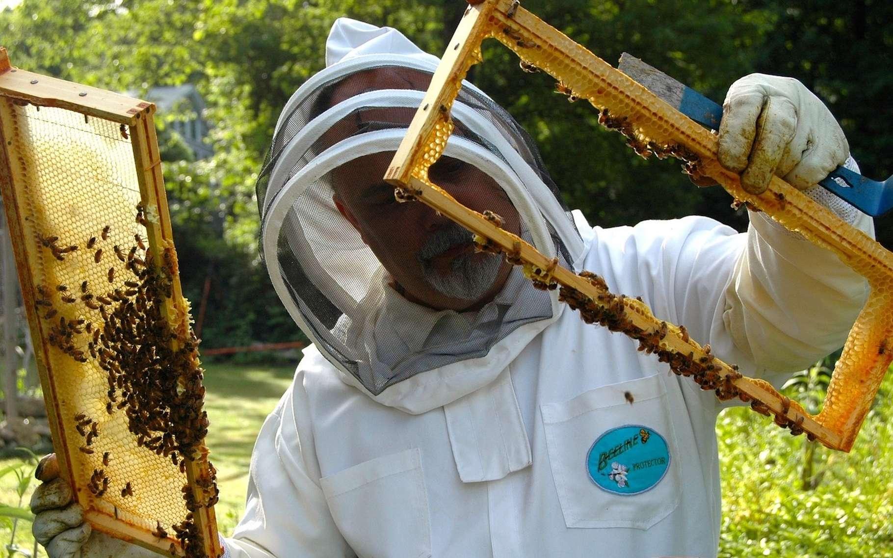 Voile, combinaison, gants : pour l'apiculteur, mieux vaut prendre quelques précautions avant d'aller travailler à la ruche et s'habiller en blanc. © BusinessHelper, Pixabay, DP