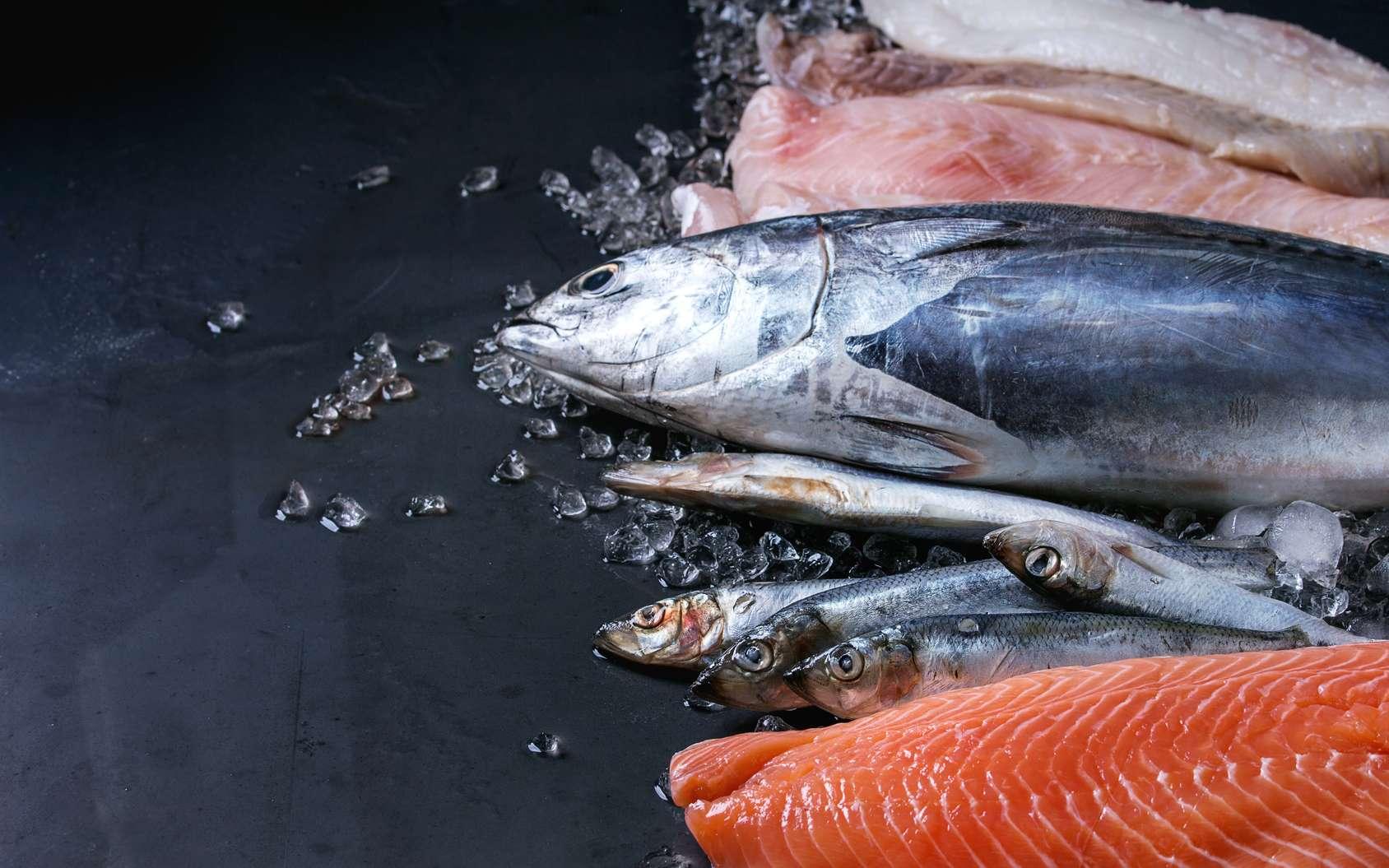 Poisson : quels critères pour une pêche durable ? © Natasha Breen, Fotolia