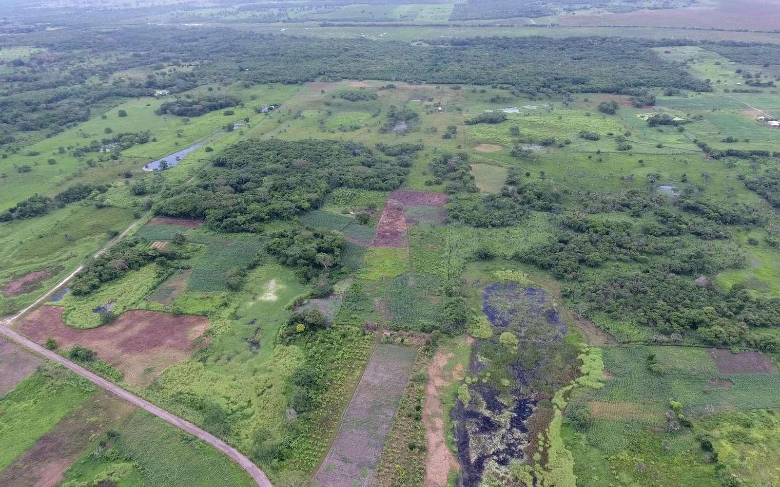 Vue aérienne d'Aguada Fénix, située au Mexique © Takeshi Inomata