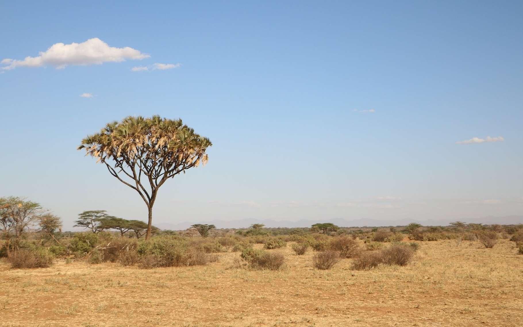 La savane est l'un des paysages typiques du climat tropical. © ronbd, Pixabay, CC0 Creative Commons