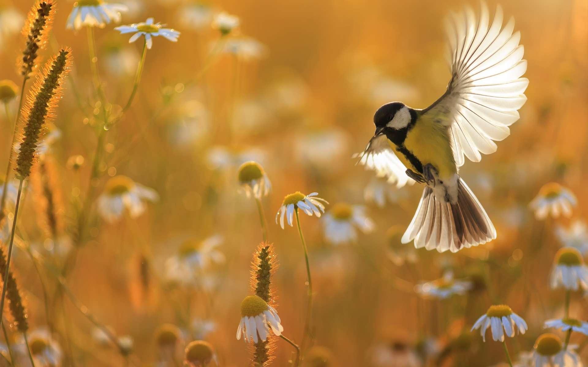 La situation de la faune et de la flore sauvages s'est dégradée en 13 ans en France. © Nataba, Adobe stock