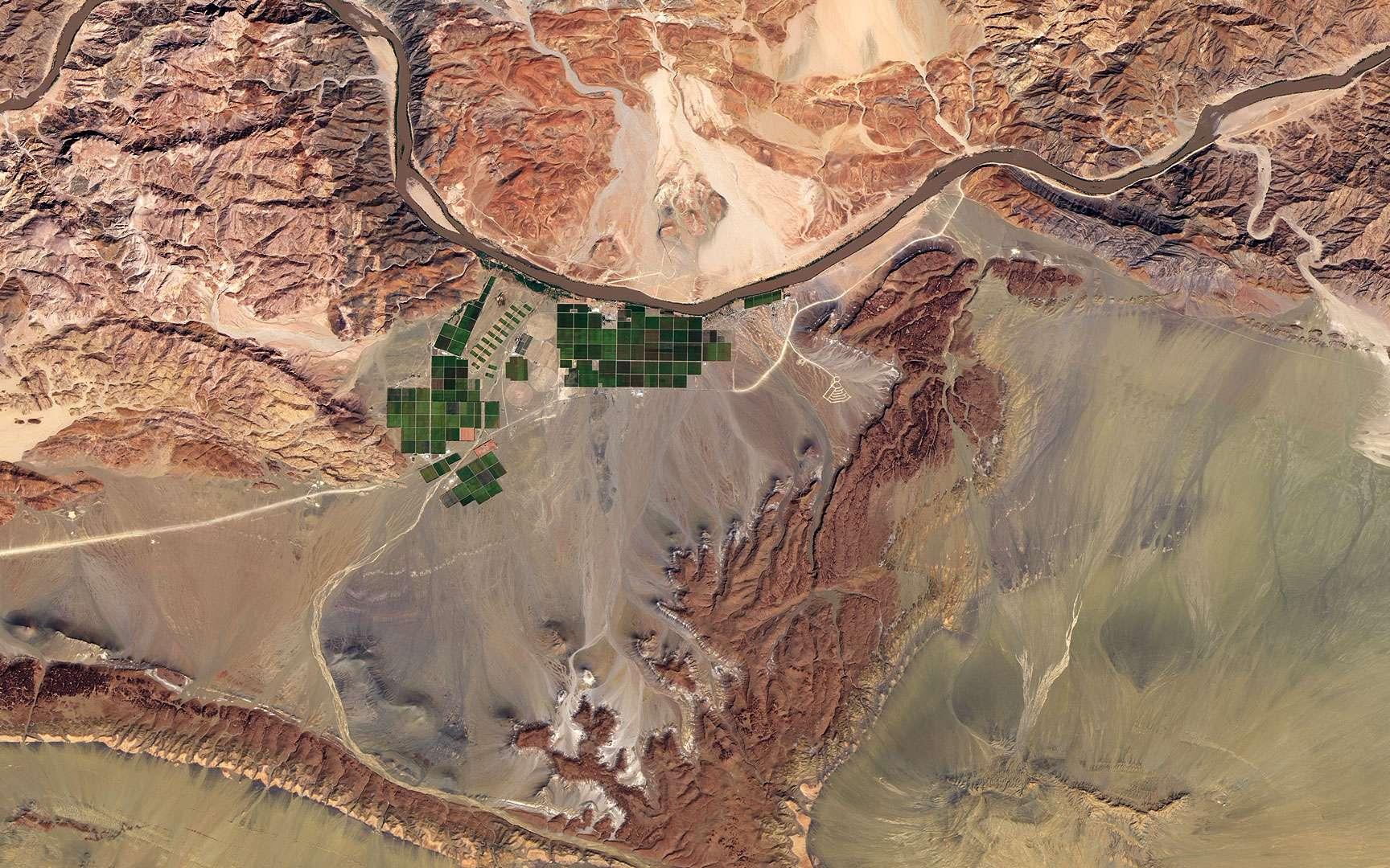 Culture du raisin le long du fleuve Orange. Le fleuve Orange est le plus long fleuve d'Afrique du Sud (2.160 km) et sert en partie de frontière avec la Namibie voisine. À une centaine de kilomètres en amont de l'embouchure vers l'océan Atlantique, des programmes d'irrigation installés sur les rives de l'Orange profitent de cette source d'eau douce ainsi que des riches terres des plaines inondables. Ces rectangles aux différentes nuances de vert contrastent avec le reste du paysage désertique. La Namibie est le pays le plus aride de l'Afrique au sud du désert du Sahara et la majeure partie de son territoire est impropre à l'agriculture. C'est la culture du raisin qui domine dans cette région. Les conditions climatiques locales permettent au raisin de Namibie d'être récoltable deux à trois semaines avant celui qui est produit dans la région du Cap en Afrique du Sud. Remarque : rotation de l'image 90° à droite. © Nasa