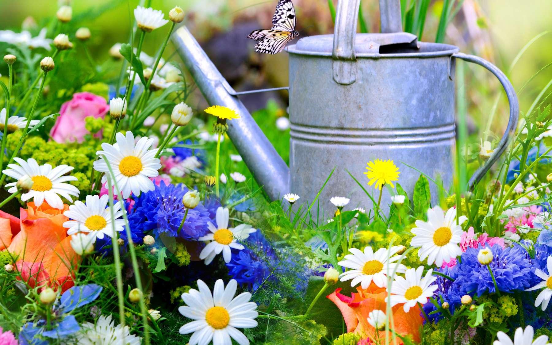 Dix fleurs qui résistent à la sécheresse. © Stefan Körber, Adobe Stock