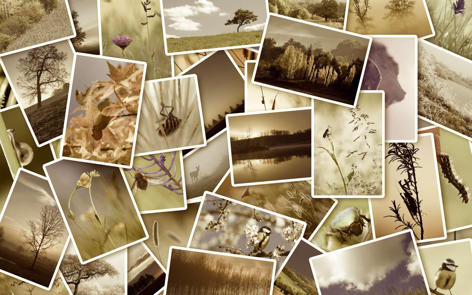 160 espèces de plantes ou d'animaux ont été déclarées éteintes entre 2010 et 2019. © mobilise248, Adobe Stock