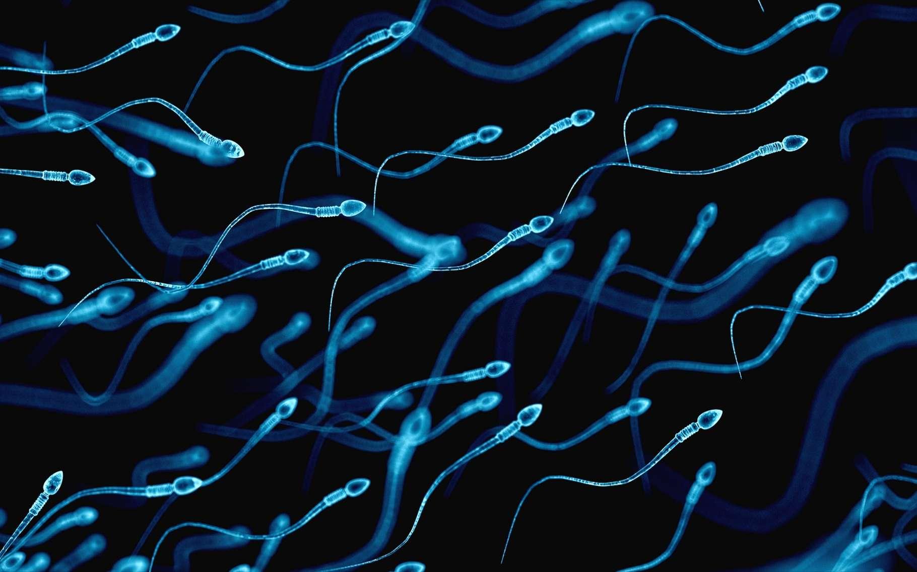 Les peptides étudiés peuvent ralentir les spermatozoïdes. © Sebastian Kaulitzki, Shutterstock