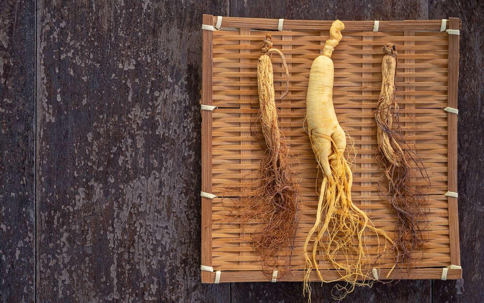 Le ginseng provient de la plante panax ginseng. © arrowsmith2, Fotolia
