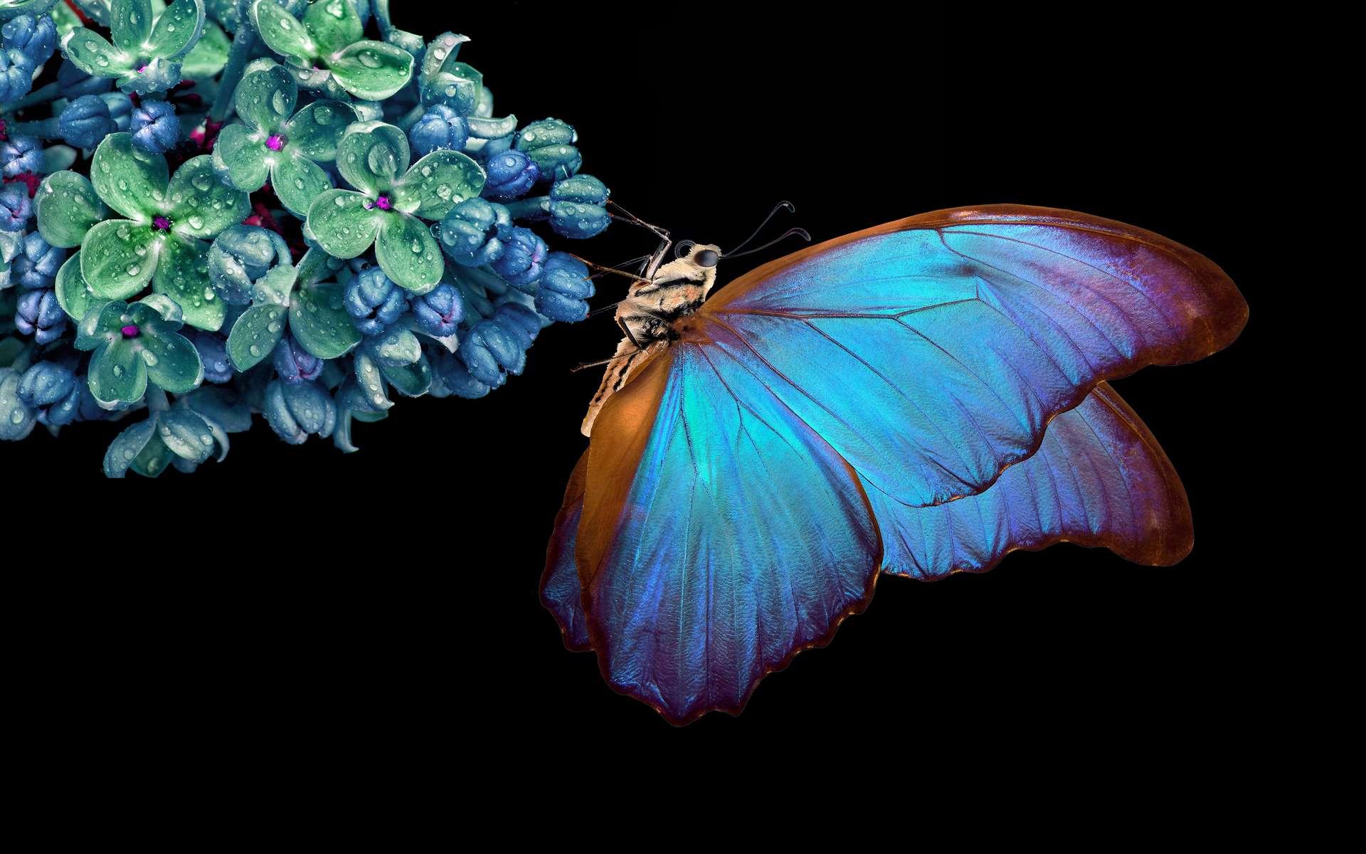 Exclusif : explorez le lien entre un papillon et un panneau...