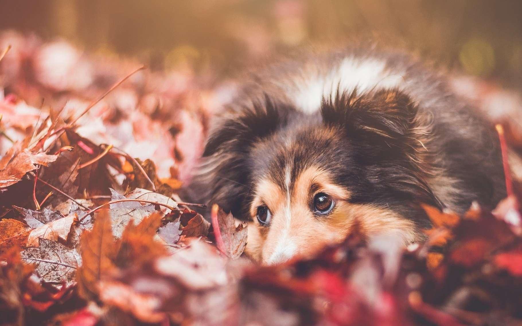 En automne, certains dangers spécifiques guettent nos chiens et nos chats. © StockSnap, Pixabay License
