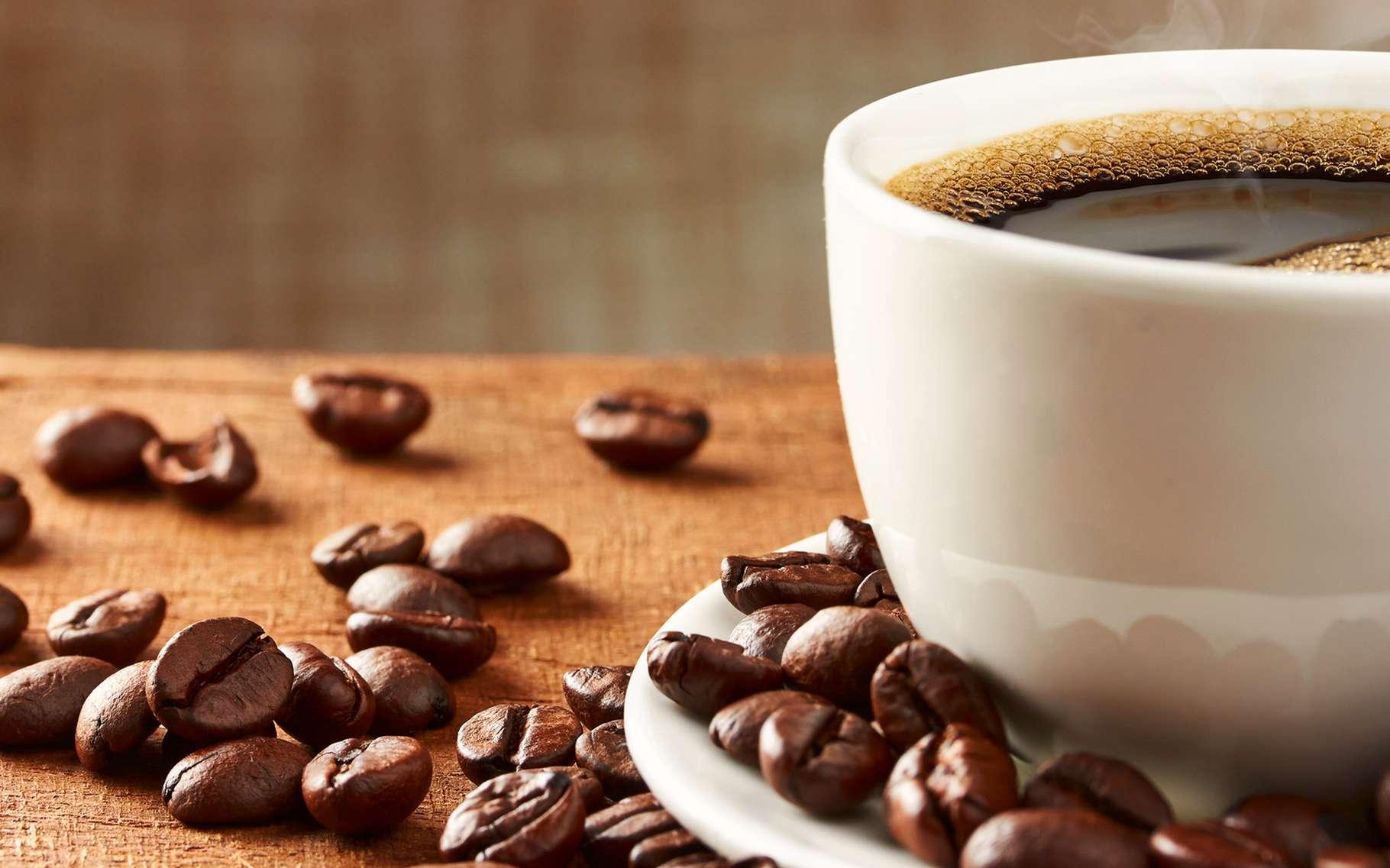 Il existe de nombreuses astuces pour valoriser le marc de café. © portumen, Shutterstock