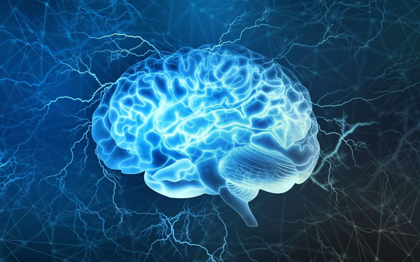 Les chercheurs ne sont pas sûrs que ces neurones soient spécifiques de l'homme mais ils ne les ont pas trouvés chez des rongeurs. © Siarhei, Fotolia