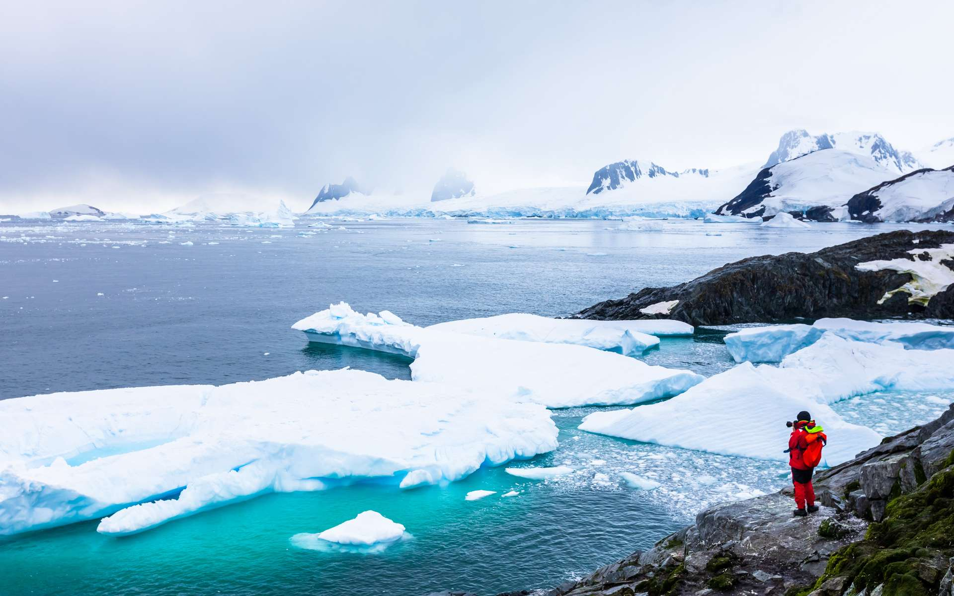 Des formes de vie découvertes par hasard en Antarctique - Futura