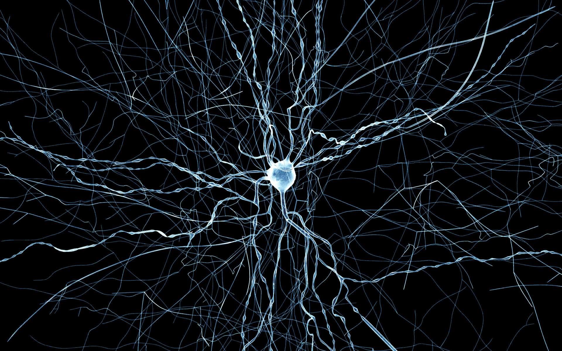 Des chercheurs ont modélisé les réseaux neuronaux dans une partie du cerveau du rat. © EPFL
